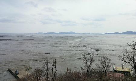 Gangwha Tidal Flat Birding for Spoonbills & Cranes