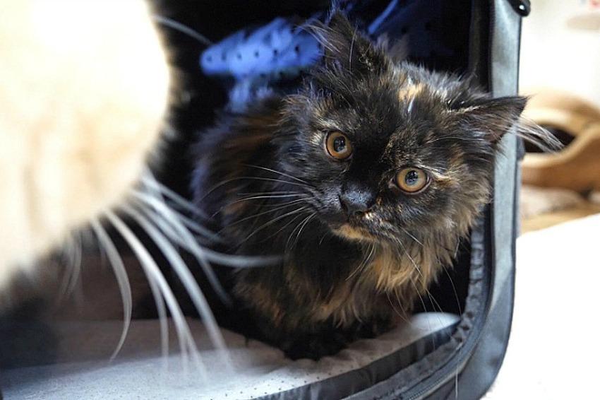 고양이 첫 목욕 [VUUM 펫 드라이룸]