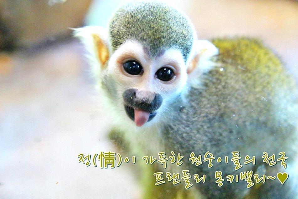 정(情)이 가득한 원숭이들의 천국, 프랜들리 몽..