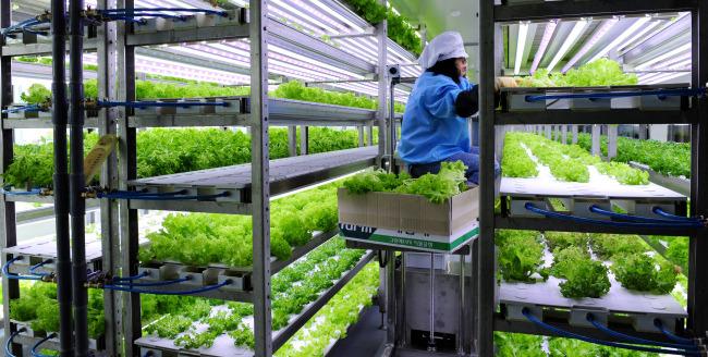 '대량생산' 식물공장의 기대와 우려