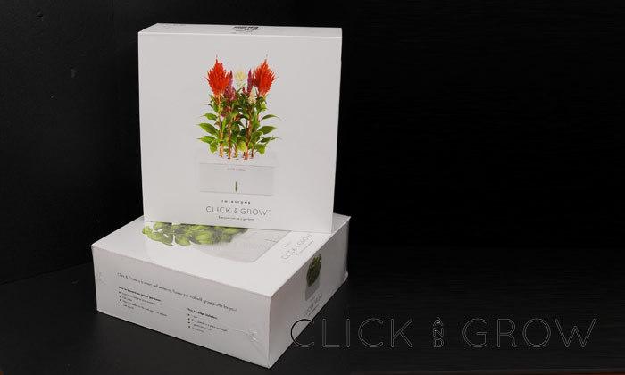 혼자 크는 식물 - CLICK & GROW