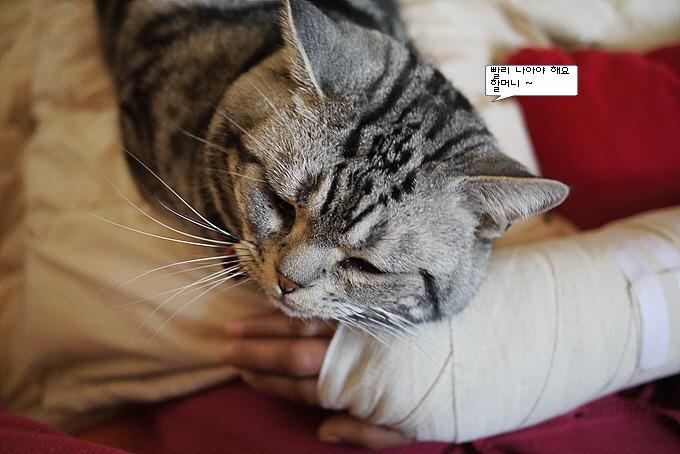 고양이와 팔 깁스 사진