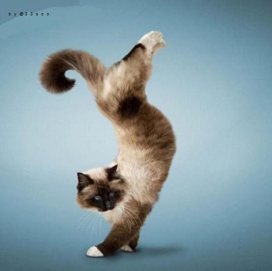 물구나무 서는 고양이
