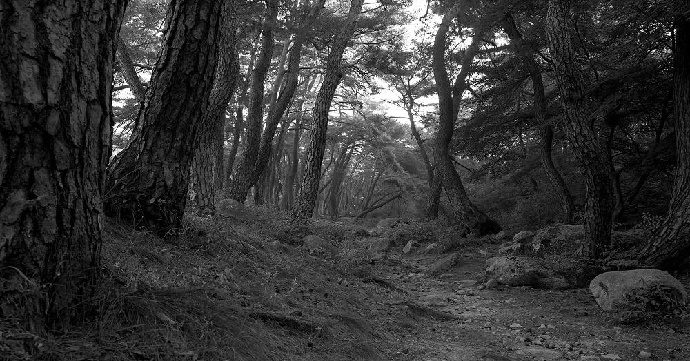 2012년 대구사진비엔날레 & 경주남산 소나무(2편)