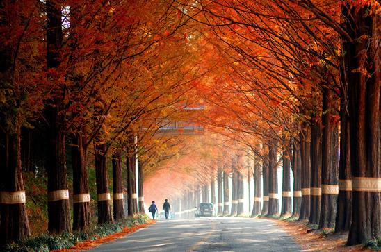 가을타는 당신에게 추천하는 이 가을, 이 음악!