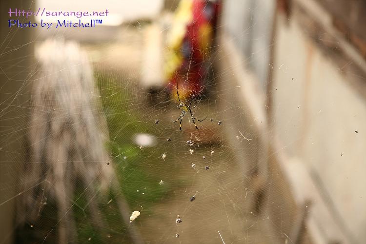 거미줄 가득한 블로그입니다;;;;;