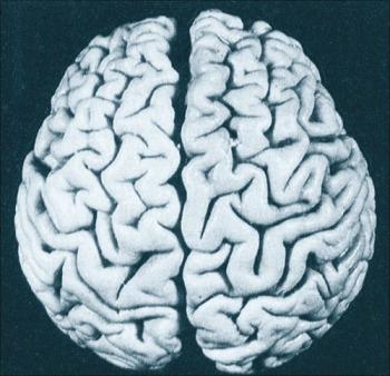 아인슈타인 뇌, 두뇌 잠재력
