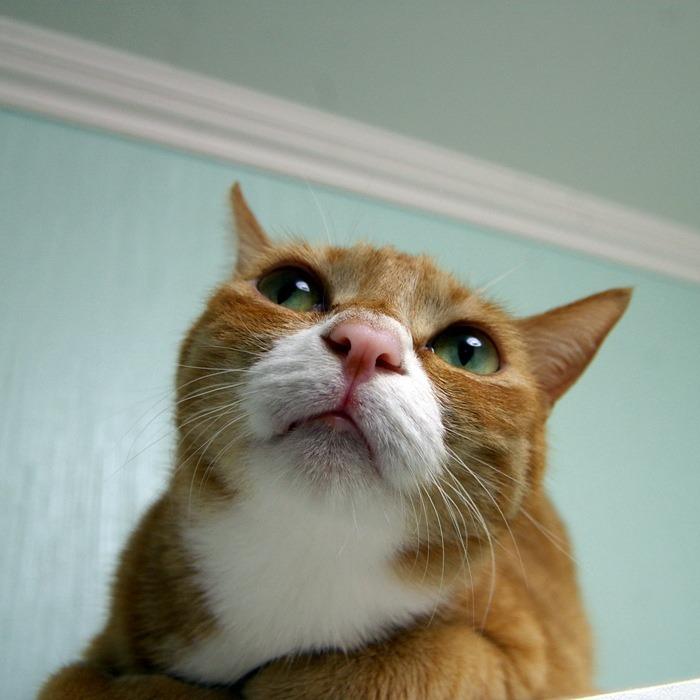 홍염이의 사진