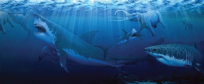바다의 포식자 메갈로돈