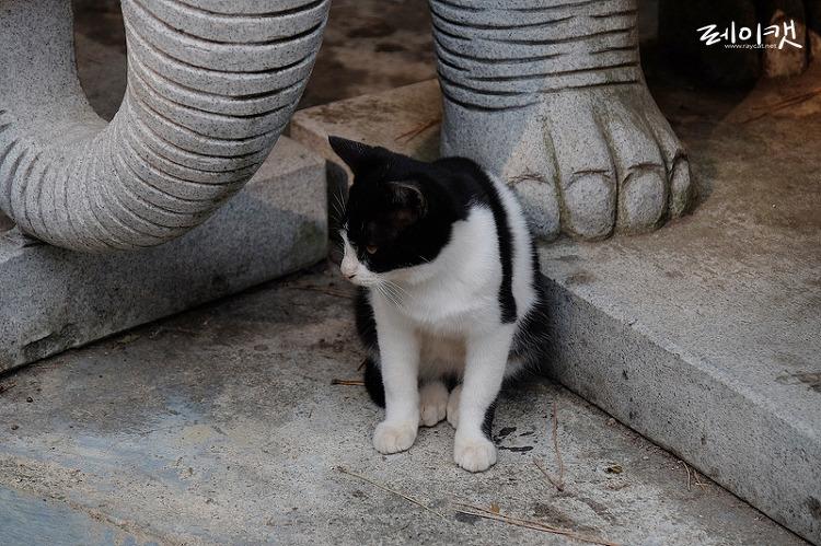 용궁사의 길고양이