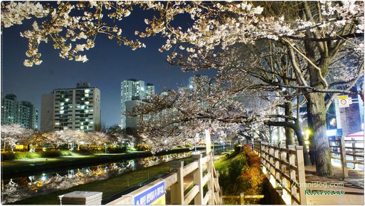 밤벚꽃 거리 산책
