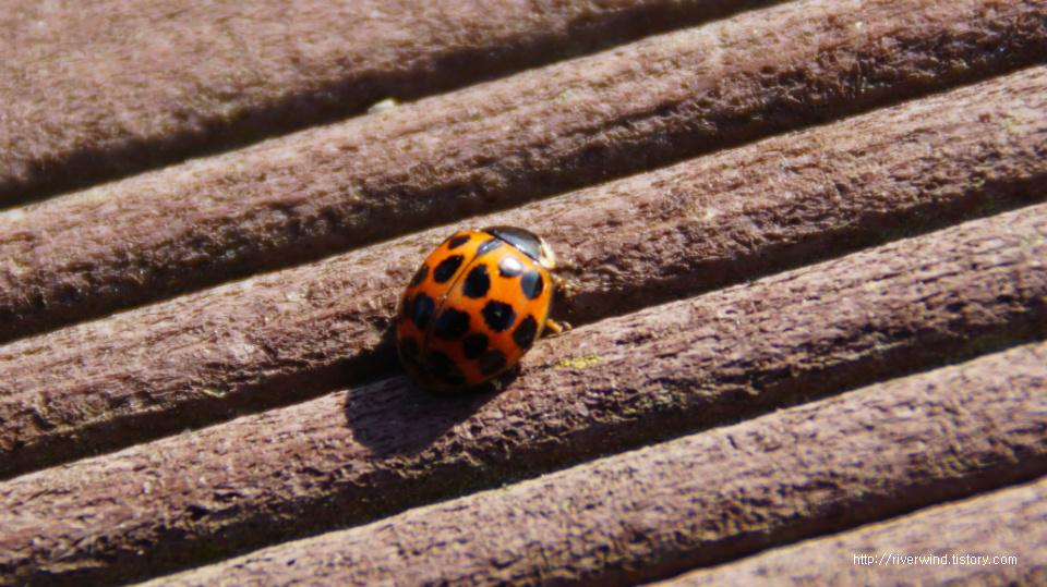 겨울철에 만난  딱정벌레