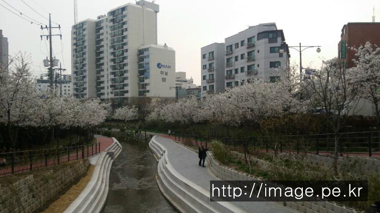 성내천의 봄