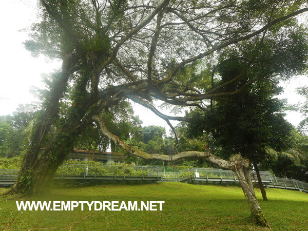 싱가포르 아트 테마 여행 - 길만 버락 NTU CCA, 미즈마 갤러리