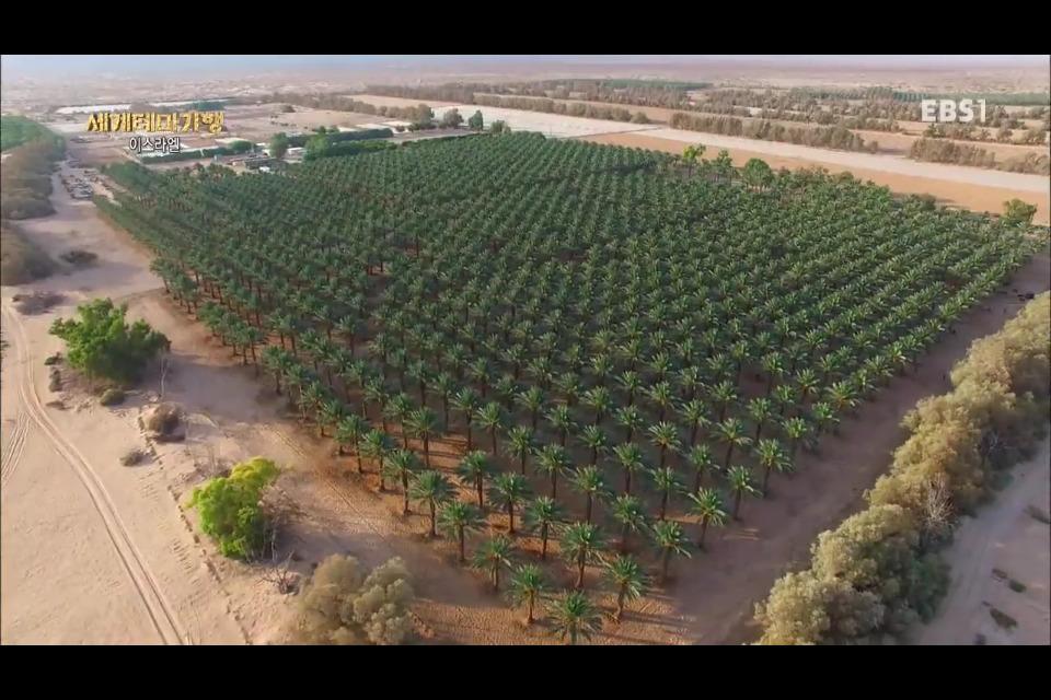 사막의 기적 이스라엘 농업을 생각하다