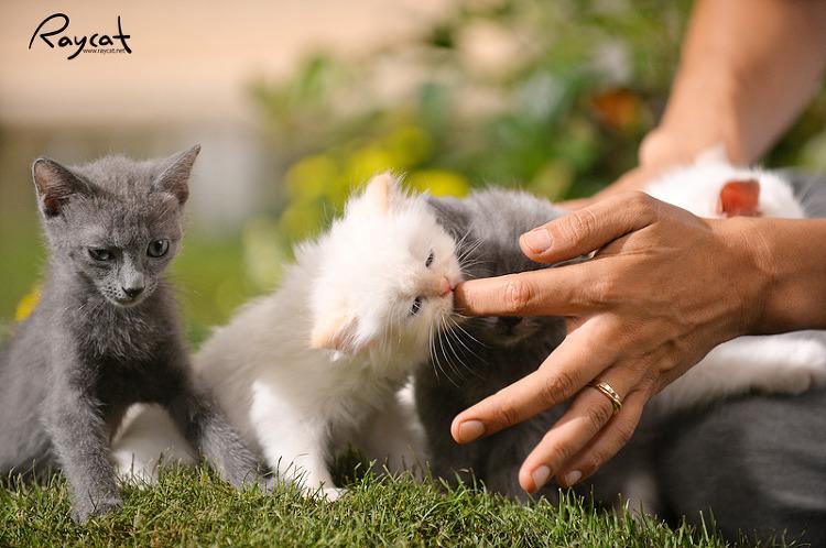 장난꾸러기 아기 고양이