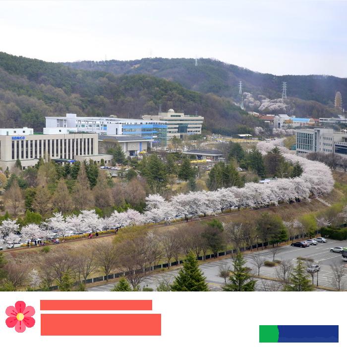탄동천 산책길 벚꽃