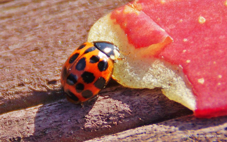 겨울철에 만난 빨간 딱정벌레