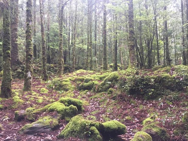 야쿠시마 원시림,,,숲의 시원은 이끼