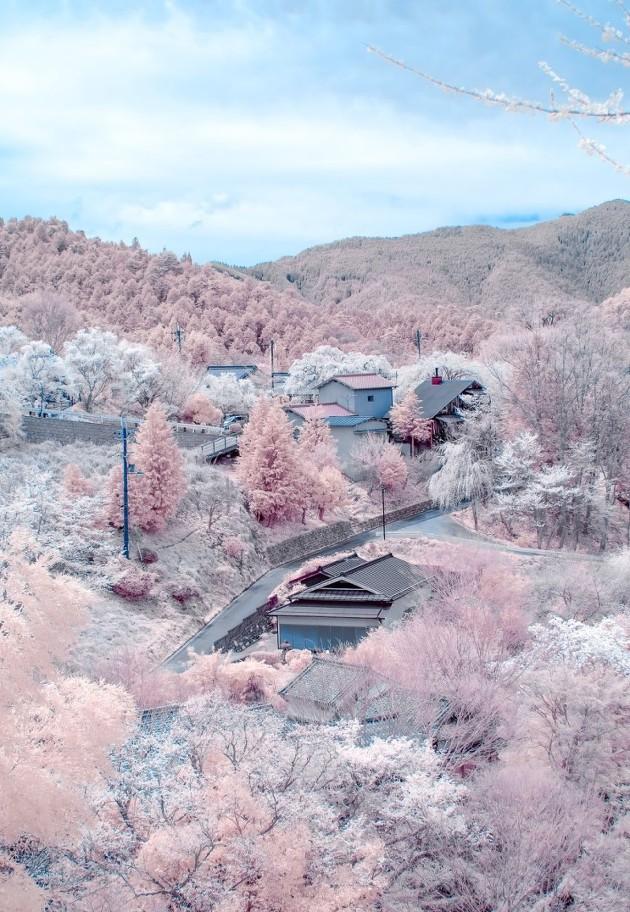 일본 나가노현의 벚꽃 사진