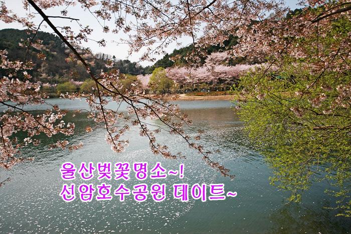 울산벚꽃명소 선암호수공원, 연인과의 벚꽃 데이트 코스!