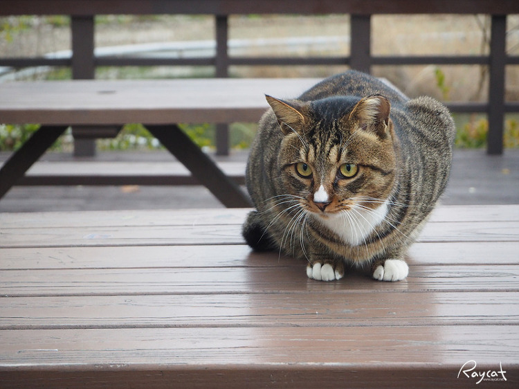 서울숲 매장 길고양이 두번째