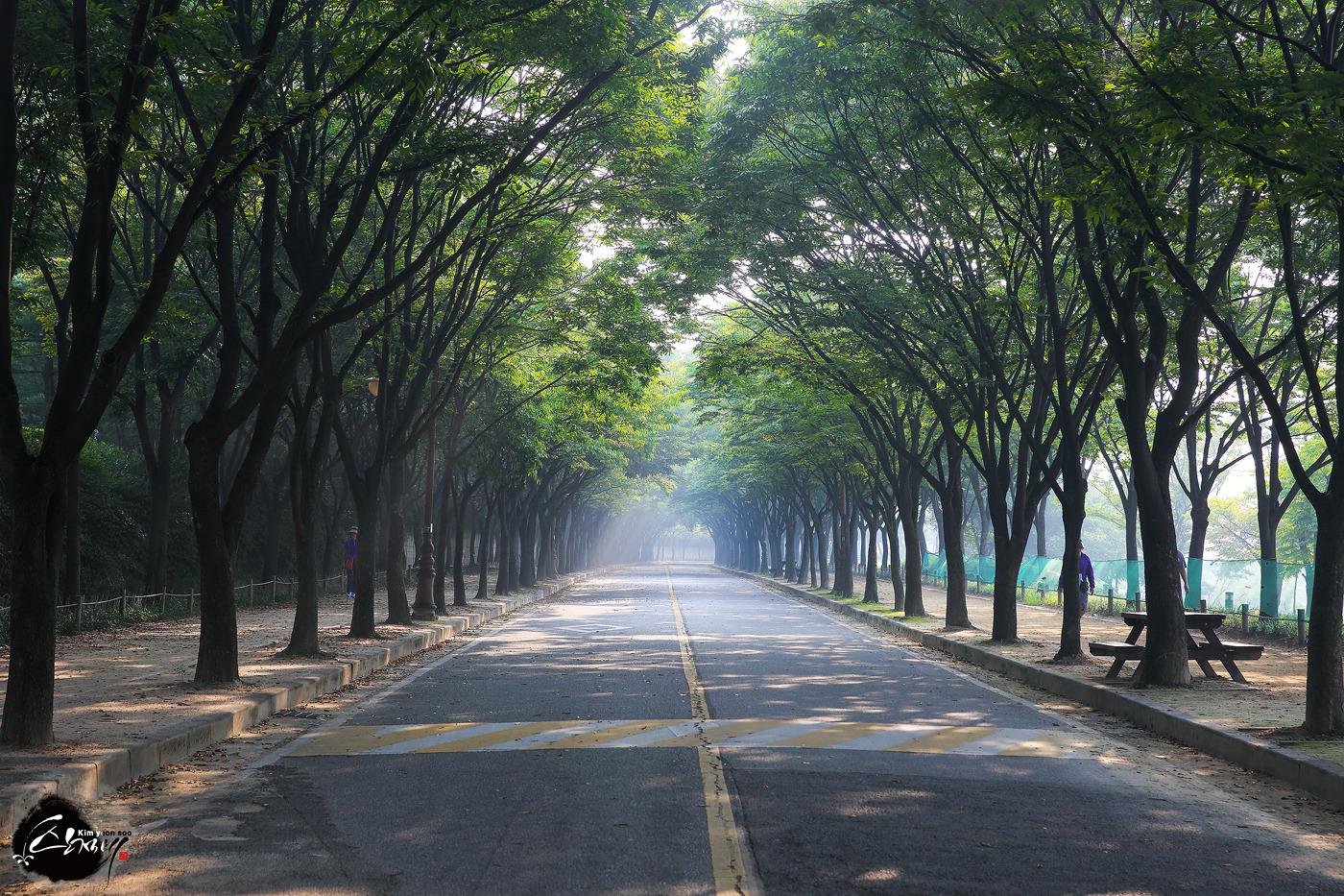 박무심한 추석날 아침에본 인천대공원의 소심한 빛내림