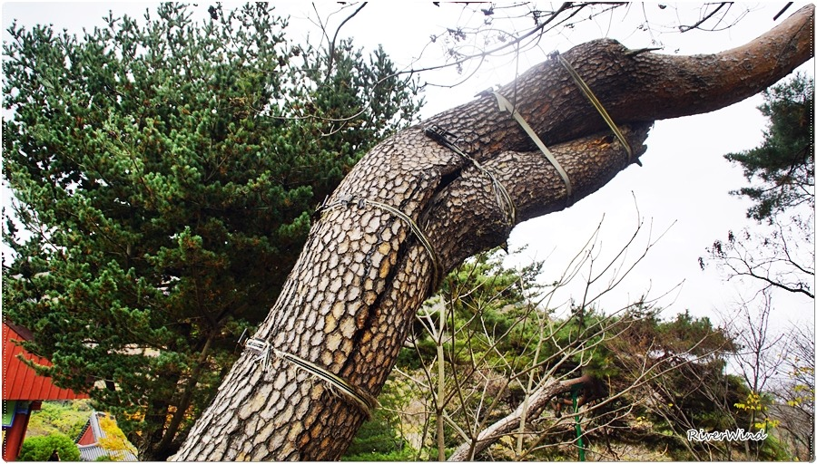 나무치료 - Treatment to tree