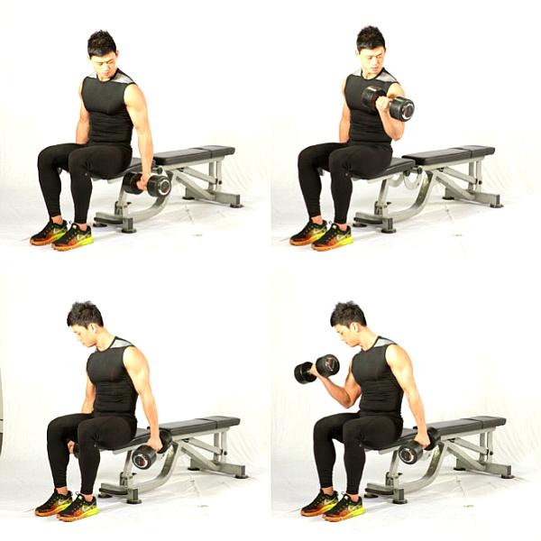 덤벨을 이용한 이두근 운동 3가지