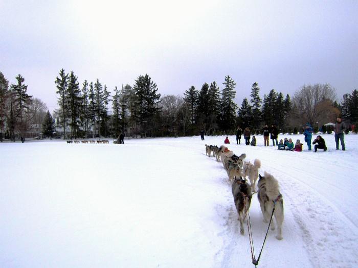 캐나다 오타와 총독관저 겨울 축제 Rideau Hall Winter Celebration Dog sledding