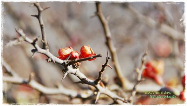한겨울에 핀 붉은 꽃