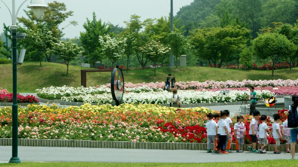 울산 대공원 장미축제