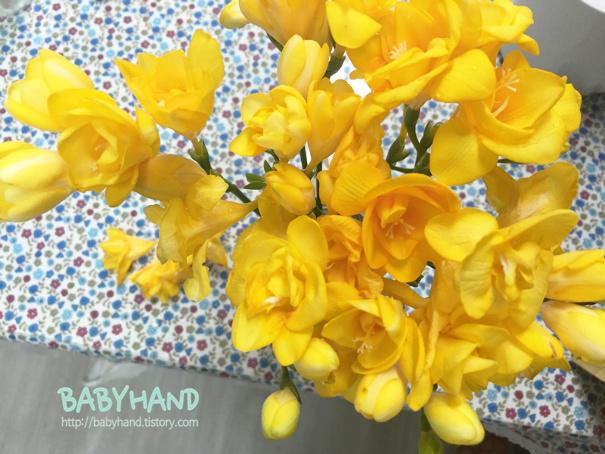노란 꽃 추천