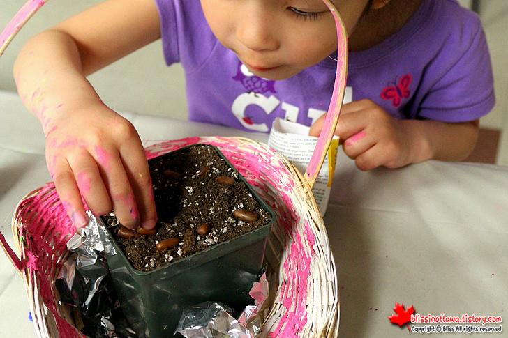 캐나다 오타와 봄 축제 ; 콩 심기
