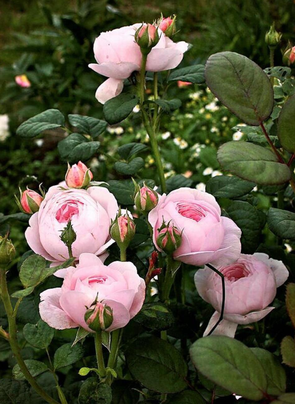 꽃다운 마음ᆢ8