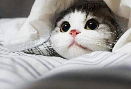 피곤할떄는 고양이