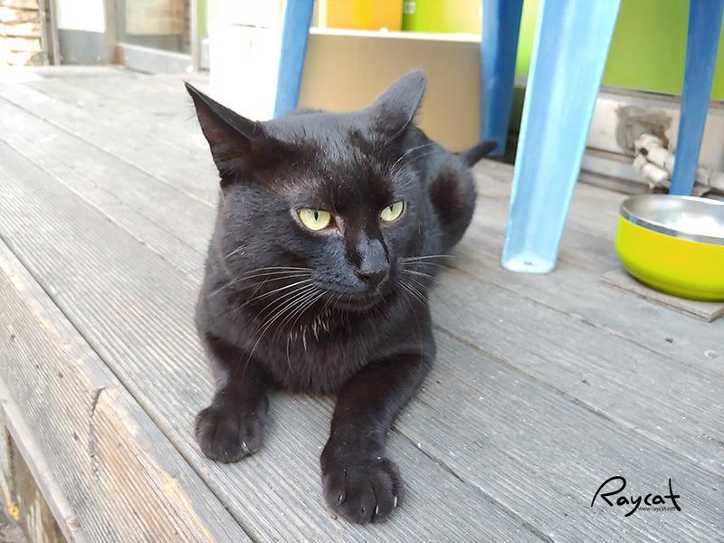 길고양이도 집고양이도 아닌 치킨집 검은고양이