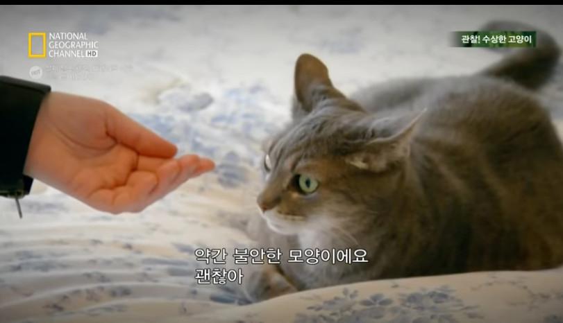 고양이키우기2