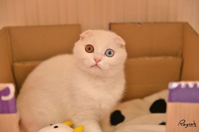 장난감을 뺏겼다 오해한 아기고양이 일월