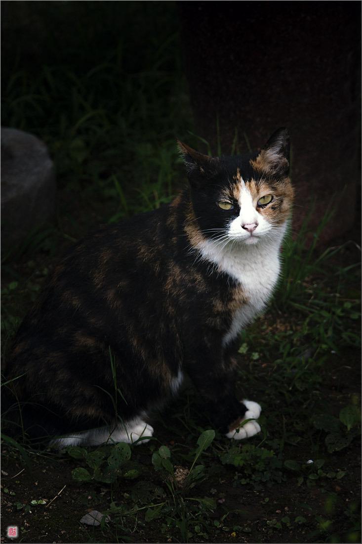 [삼성NX500] 길고양이?