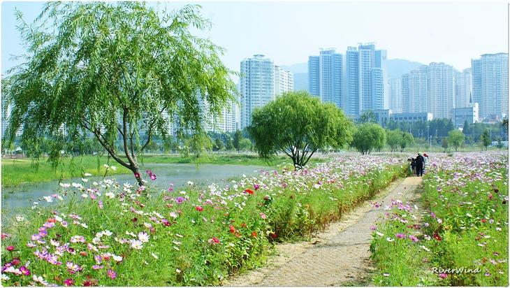 화명생태공원의 초 가을 풍경