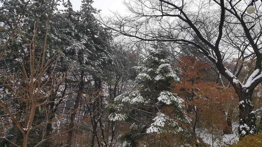 워커힐 나무 눈