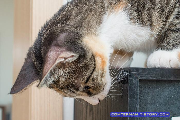 고양이 습관 교정