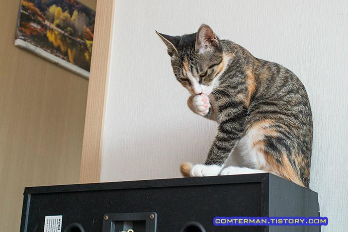 고양이 라임 레몬 효과