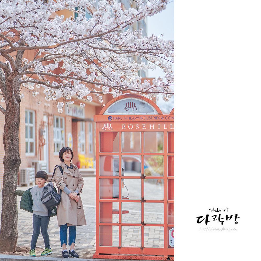 오늘도 벚꽃 - 통영 벚꽃 명소 무전동 한진로즈힐
