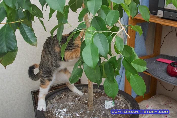 고양이 화분 점프